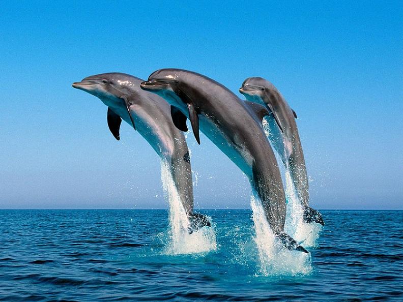 golfinhos-foto-de-portal-mundo-dos-animais