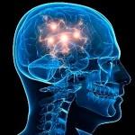 Neuronios3