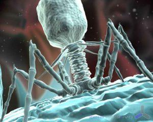 Bacteriofago_01