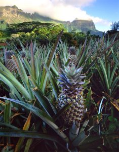 pineapple-669456_960_720