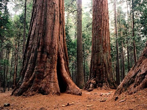 calaveras-big-trees-state-park-3